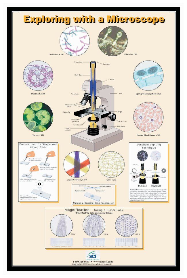 Exploring with a Microscope Poster :Teaching Supplies:Classroom Safety