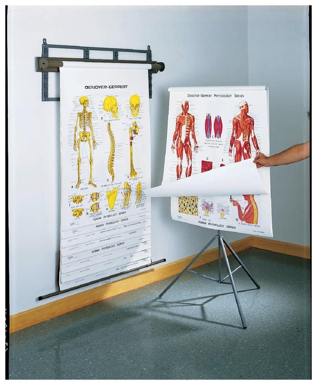Human Physiology Charts :Teaching Supplies:Classroom Safety