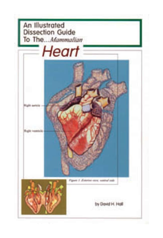 Mammalian Organ Dissection Guides Dissect Guide Mammalian Heart:Education