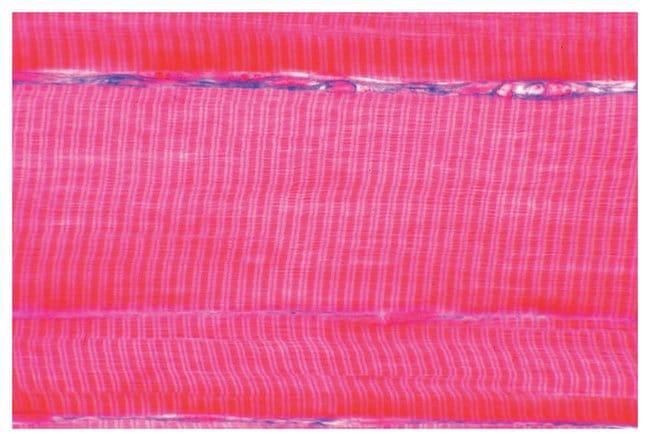 Tissue Detail Set Tissues Detail Set:Education Supplies