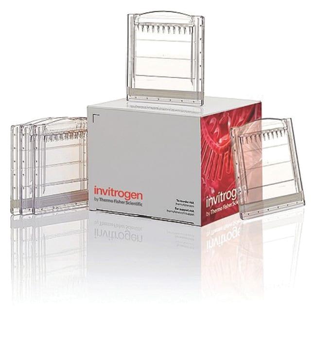 Invitrogen™Novex™ NativePAGE™ 4-16% Bis-Tris Protein-Gele, 1.0mm, 10-Well 4bis16% Bis-Tris-Protein-Gele; 1.0mm; 10Wells Acrylamide Electrophoresis Gels