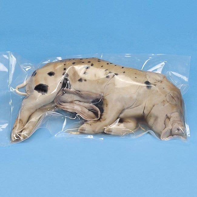 Carolina Formalin Pigs :Teaching Supplies:Biology Classroom