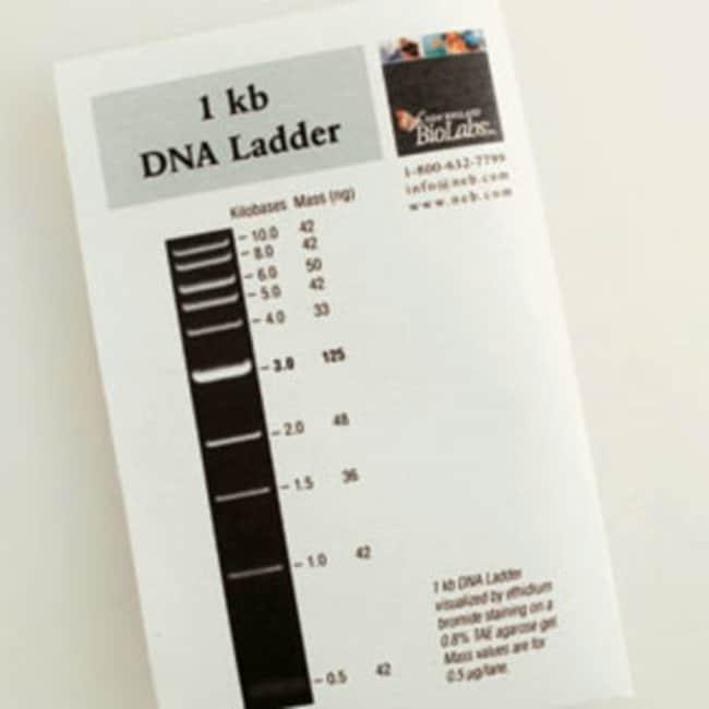 1 Kb Ladder Biolabs