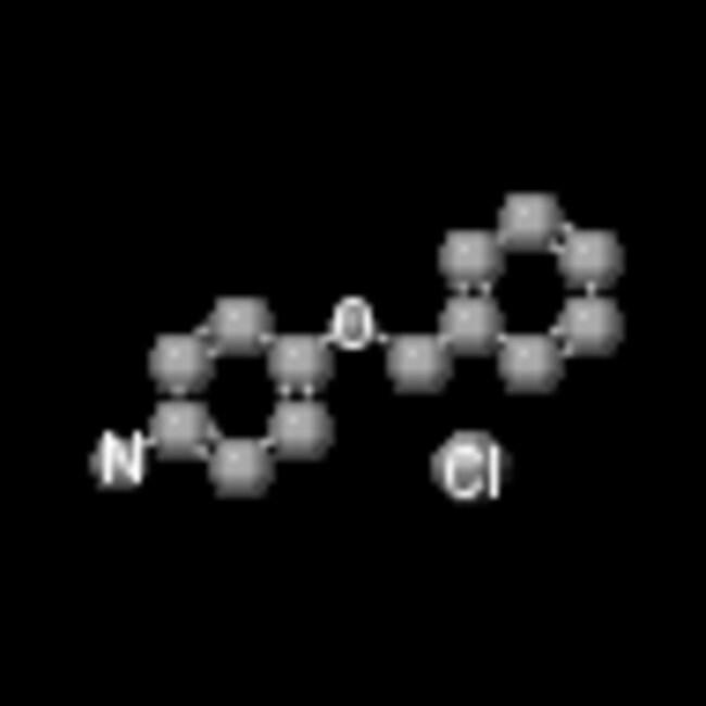 Frontier Scientific 500g 4-Benzyloxyaniline hydrochloride, 98%, 51388-20-6