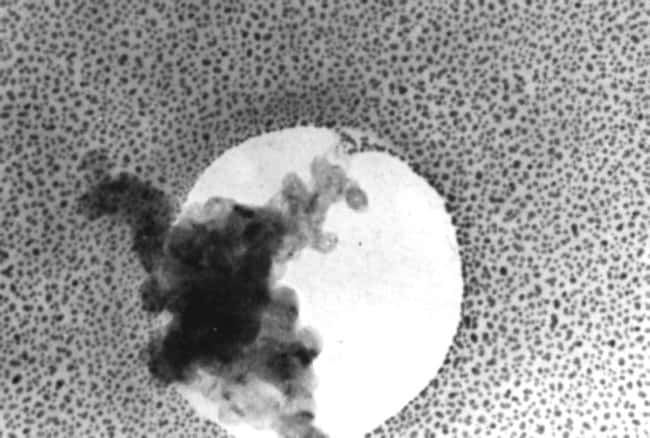 Electron Microscopy Sciences Combined Test Specimen  COMBINED TEST SPECIMEN