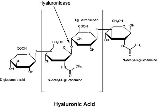 Sigma Aldrich Fine Chemicals Biosciences Hyaluronidase from bovine testes