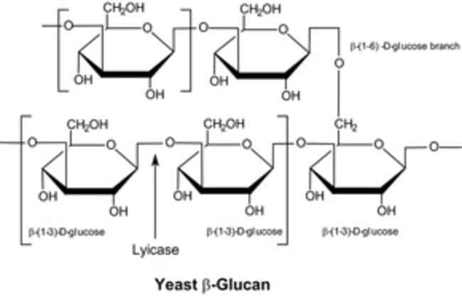 Sigma Aldrich Fine Chemicals Biosciences Lyticase from Arthrobacter luteus