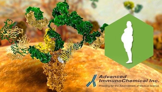 Advanced ImmunoChemical, Inc.Monoclonal Mouse Anti-Human Insulin,  0.2mg