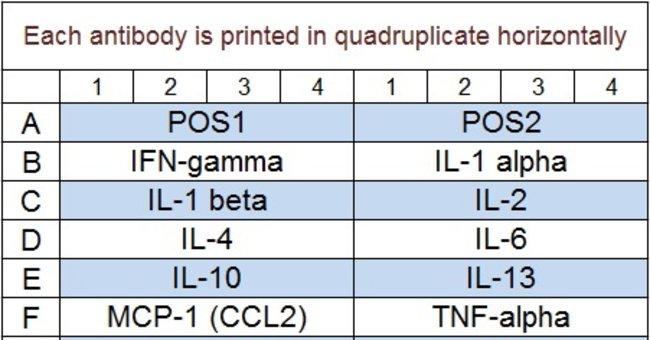 Raybiotech Inc Quantibody Rat Inflammation Array 1 Kit.  RAT INFLAMMATION