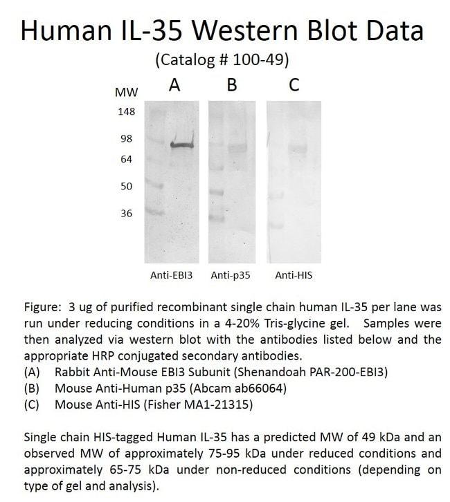 Shenandoah Biotechnology, IncHuman IL-35, Recombinant Protein, Shenandoah