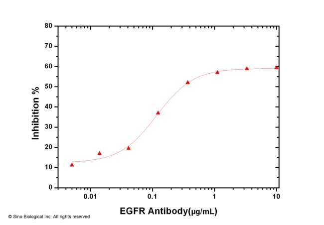 Sino Biological EGFR / HER1 / ErbB1 Neutralizing Antibody  EGFR NEUTRALIZING