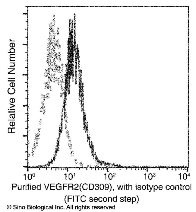 Sino Biological VEGFR2 / KDR / Flk-1 / CD309 Antibody, Mouse MAb  FLK-1/KDR
