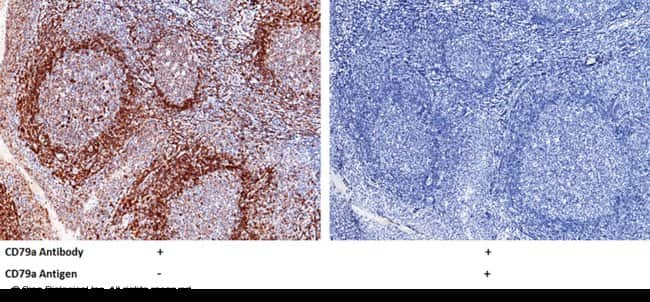 Sino Biological CD79a Antibody, Rabbit PAb, Antigen Affinity Purified