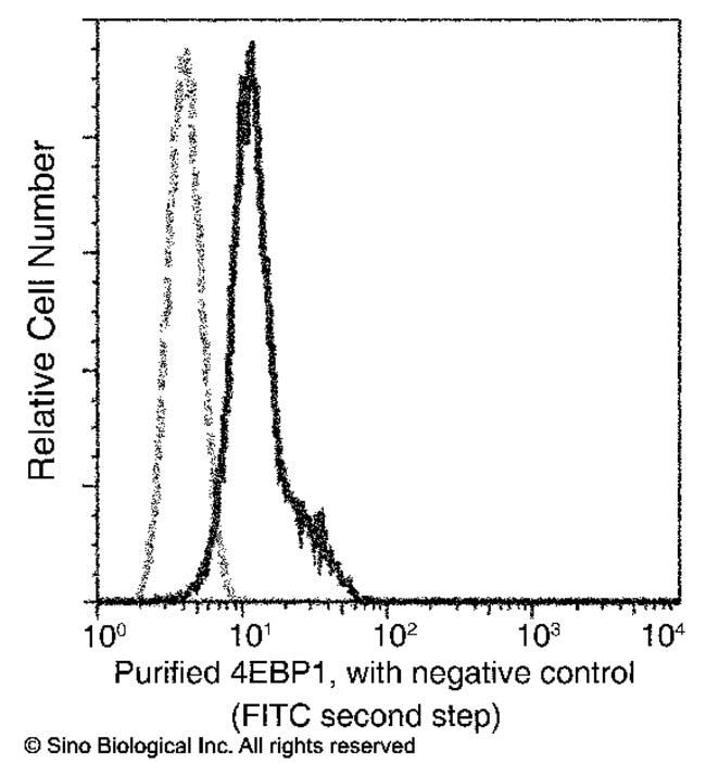 Sino Biological 4E-BP1 / EIF4EBP1 Antibody, Mouse MAb  4E-BP1/EIF4EBP1