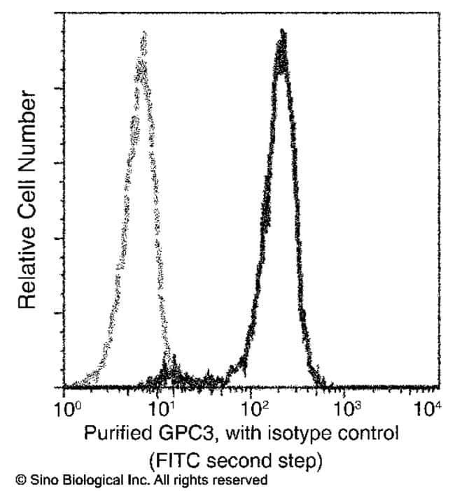 Sino Biological Glypican 3 / GPC3 / OCI-5 Antibody (FITC), Rabbit MAb