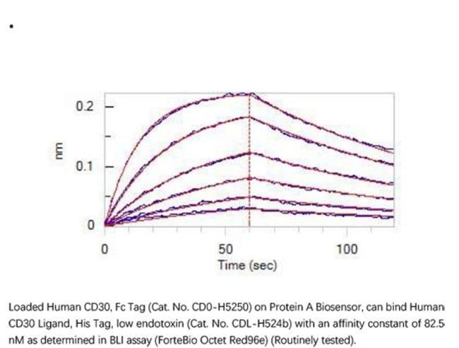 ACROBiosystemsRecombinant Protein;Human CD30 / TNFRSF8 Protein, Fc Tag;HEK293;100UG;CD0,TNFRSF8,CD30,TNFRSF-8,D1S166E,Ki-1