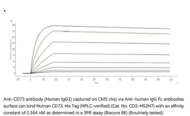 ACROBiosystemsACROBiosystems Human CD73 / NT5E Protein, His Tag (HPLC-verified)