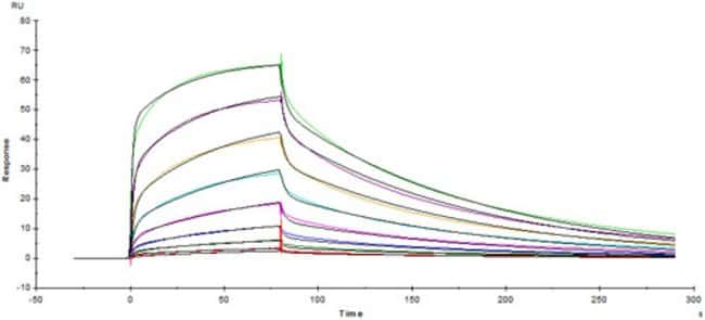 ACROBiosystemsACROBiosystems Human Fc gamma RIIIA / CD16a (V176) Protein,