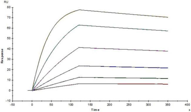 ACROBiosystemsAnti-SARS-CoV-2 Spike S1 Antibody, Chimeric mAb