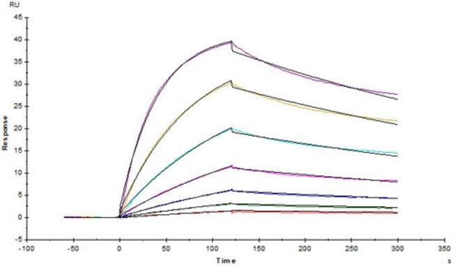 ACROBiosystemsSARS-CoV-2 (COVID-19) S protein RBD (G476S), His Tag