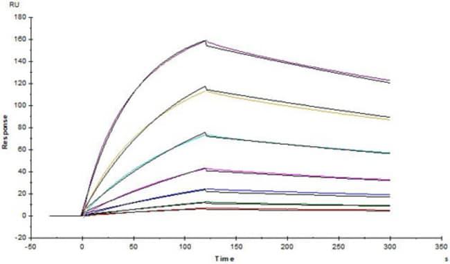 ACROBiosystemsAnti-SARS-CoV-2 Spike NTD Antibody, Chimeric mAb
