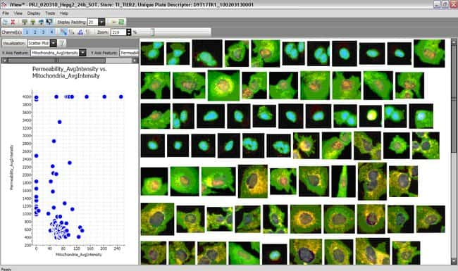 Thermo Scientific™ HCS Studio™ 2.0 Cell Analysis Software