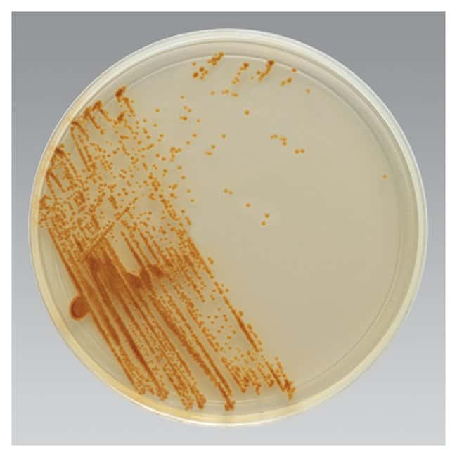 Thermo Scientific Remel BiGGY Agar :Life Sciences:Microbiology