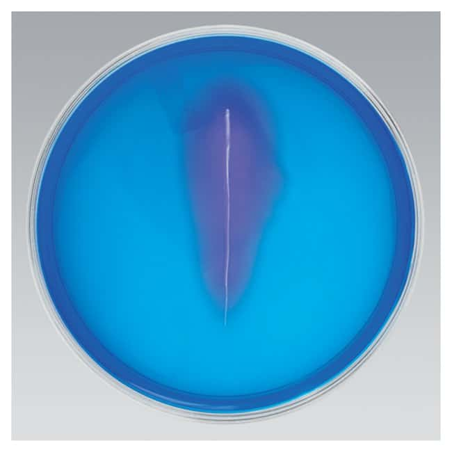 Thermo Scientific Remel DNase Test Agar w/Toluidine Blue :Life Sciences:Microbiology