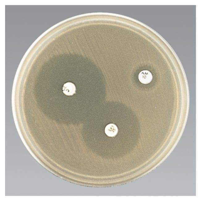 Thermo Scientific Haemophilus Test Medium (HTM) :Life Sciences:Microbiology
