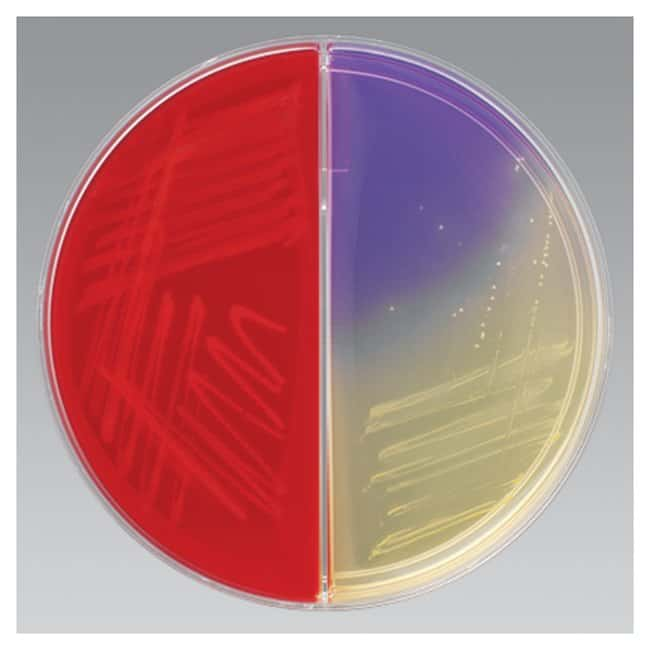 Thermo Scientific Remel Biplates, HE through V Agar :Life Sciences:Microbiology