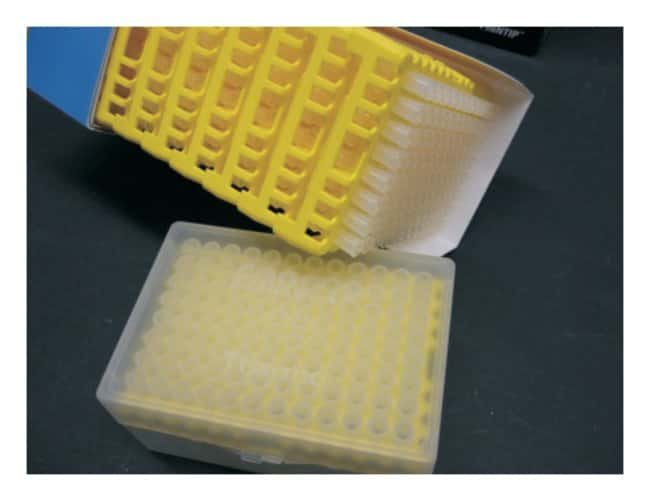 Thermo Scientific™ Puntali universali per pipette Finntip™ Finntip™ Pipette Tips; Volume: 0.5 to 250μL; Color code: Yellow; Sterility: Sterile; Packaging: 4× Racks of 96 tips and 10&times reload inserts of 96 tips; Unit Size: 1344 tips Thermo Scientific™ Puntali universali per pipette Finntip™