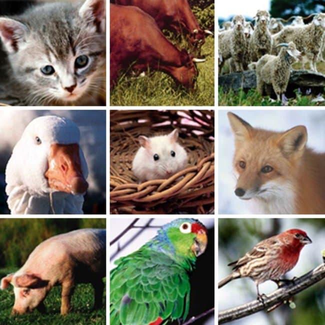 Thermo Scientific ImmunoCAP Epidermal and Animal Protein Allergen Mixes