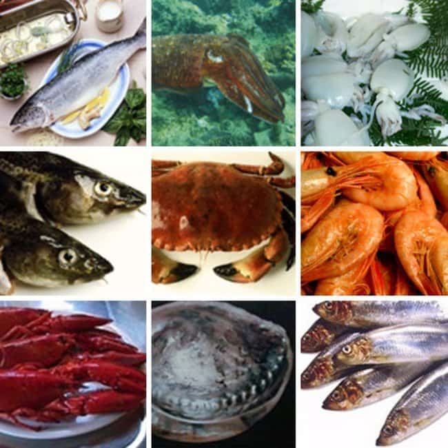 Thermo Scientific ImmunoCAP Fish, Shellfish and Mollusk Allergens Snail:Diagnostic