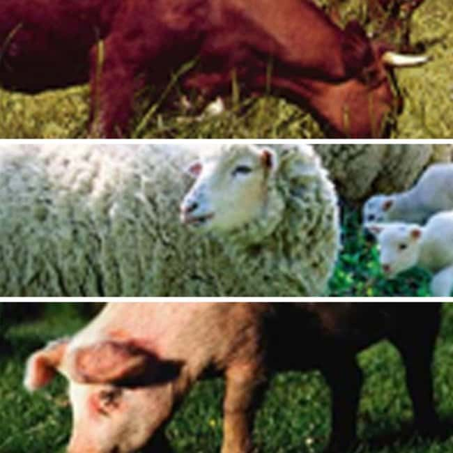 Thermo Scientific ImmunoCAP Meat Allergens Pork (Sus spp.):Diagnostic Tests