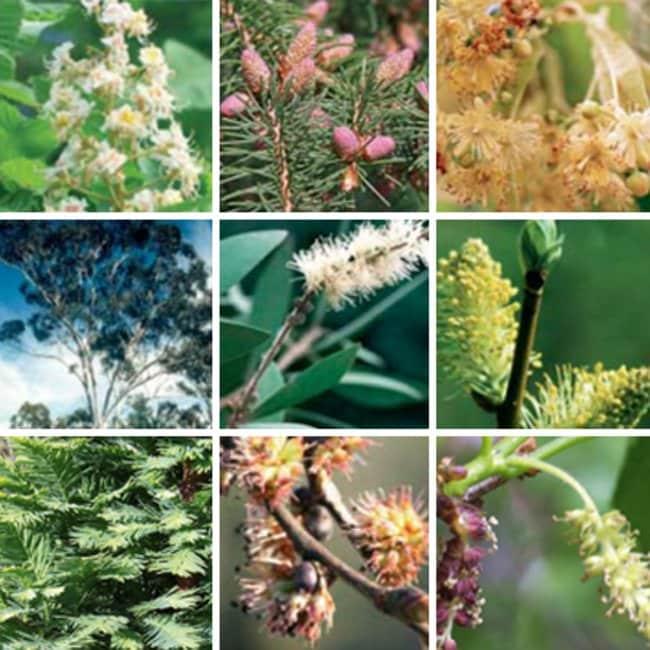 Thermo Scientific ImmunoCAP Tree Allergen Components Allergen code: t216:Diagnostic