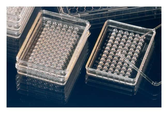 Thermo Scientific™Nunc™ MiniTrays with Nunclon™ Delta surface: Cell Dividers, Inserts, Scrapers and Utensils Cell Culture