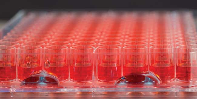 Thermo Scientific™Nunc™ Edge™ 96-Well, Non-Treated, Flat-Bottom Microplate 1/Pk., 50/Cs. Products
