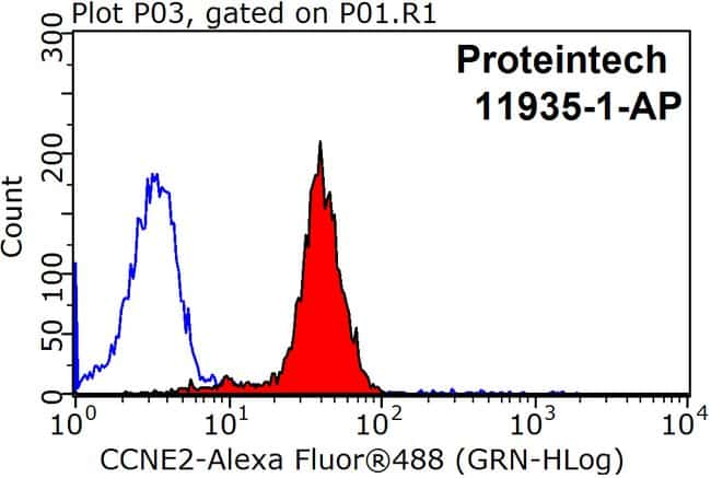 Cyclin E2 Rabbit anti-Human, Polyclonal, Proteintech 20 μL; Unconjugated Ver productos