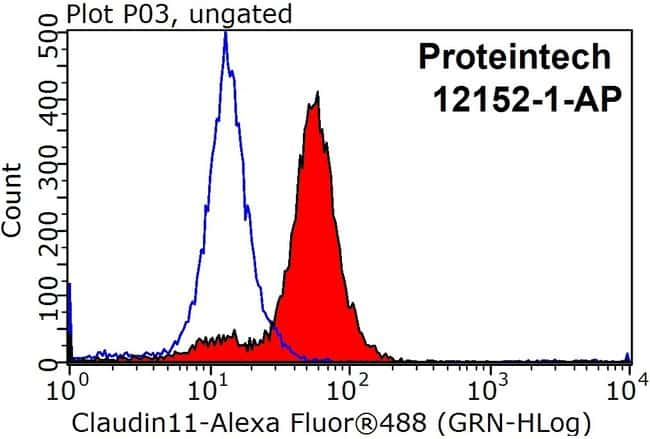 Claudin 11 Rabbit anti-Human, Polyclonal, Proteintech 20 μL; Unconjugated Ver productos