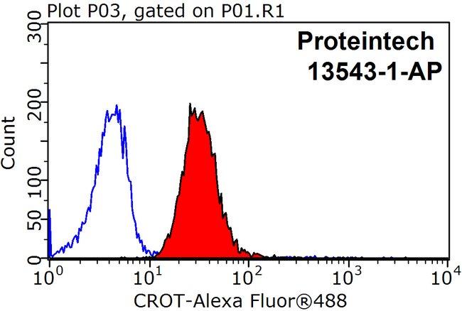CROT Rabbit anti-Human, Mouse, Rat, Polyclonal, Proteintech 20 μL; Unconjugated voir les résultats