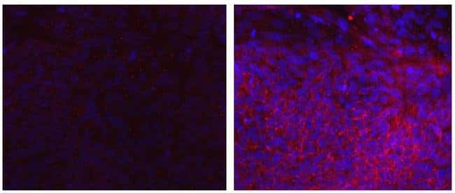 PCDH1 (Protocadherin 1) Mouse anti-Human, Clone: CSTEM31, eBioscience™ 25 μg; Unconjugated Ver productos