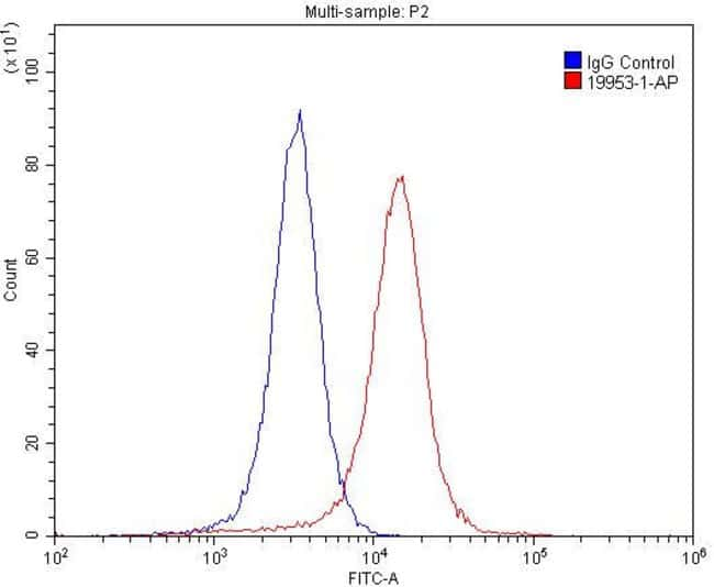 NMDAR2A Rabbit anti-Human, Mouse, Polyclonal, Proteintech 20 μL; Unconjugated Ver productos
