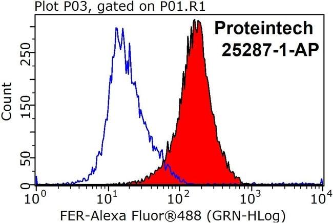 FER Rabbit anti-Human, Mouse, Polyclonal, Proteintech 150 μL; Unconjugated Ver productos