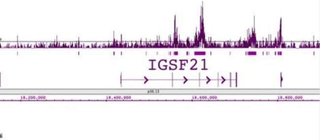 Histone H2BK120ac Rabbit anti-Human, Unconjugated, Polyclonal, Active Motif:Antibodies:Primary
