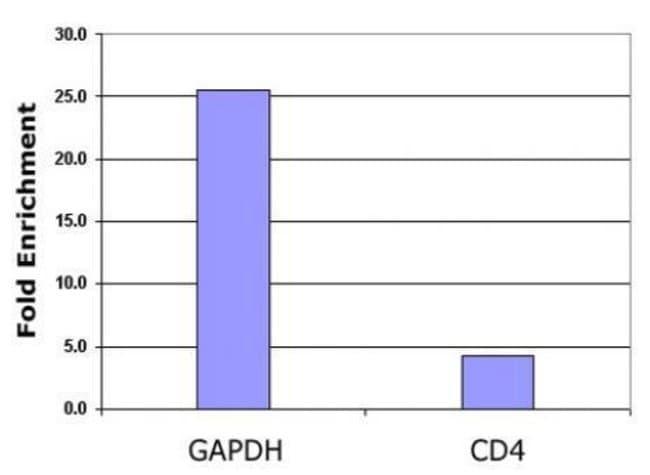 Histone H2BK5ac Rabbit anti-Human, Unconjugated, Polyclonal, Active Motif:Antibodies:Primary