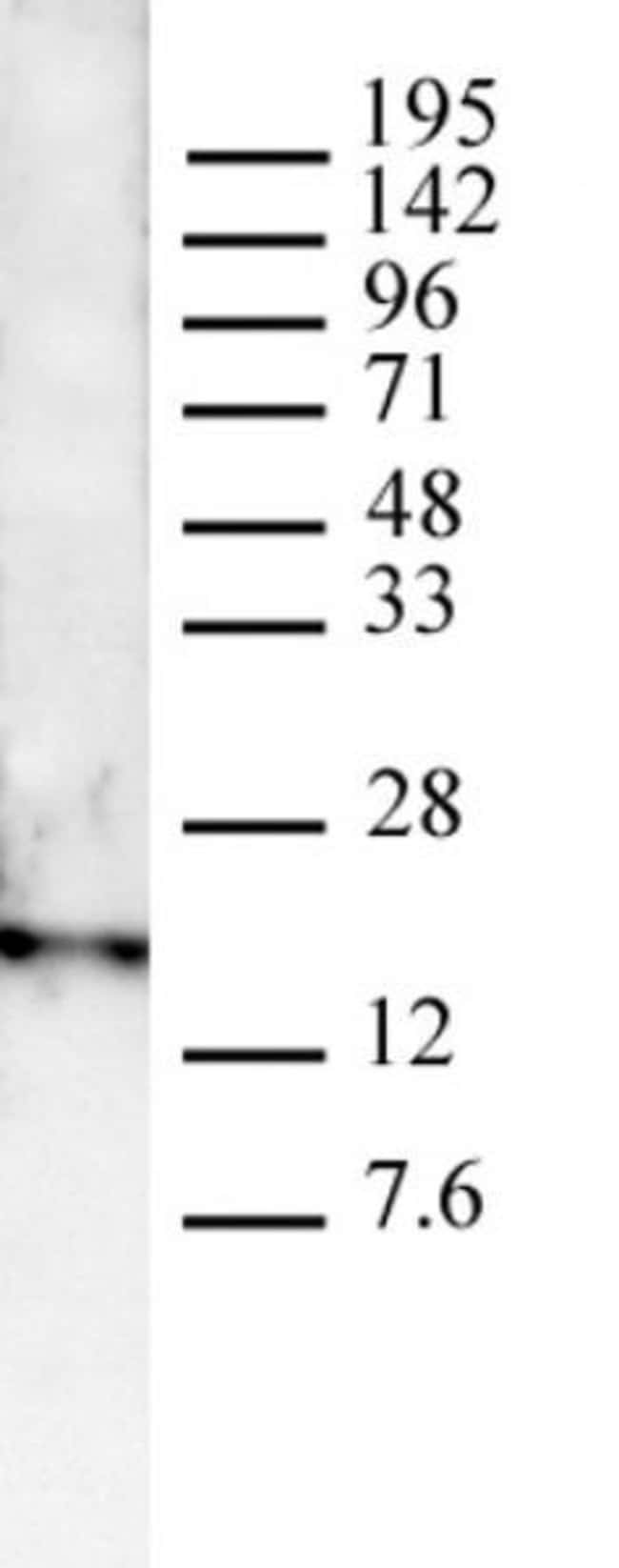 Histone H3K4me3 Rabbit anti-Human, Mouse, Yeast, Unconjugated, Polyclonal,