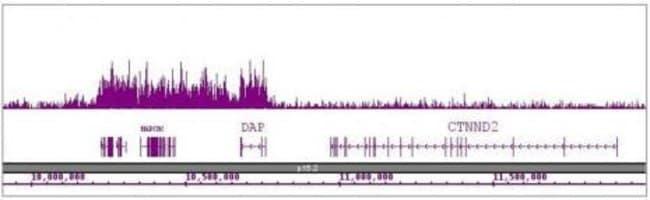 Histone H4K16ac Rabbit anti-Drosophila, Human, Mouse, Yeast, Unconjugated,