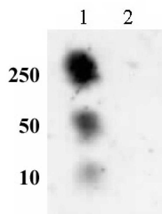 Histone H2AS129ph Rabbit anti-Yeast, Unconjugated, Polyclonal, Active Motif:Antibodies:Primary