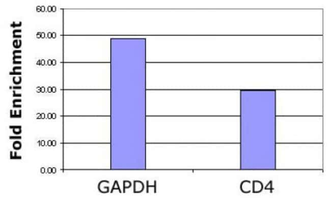 Histone H3K36ac Rabbit anti-Human, Unconjugated, Polyclonal, Active Motif:Antibodies:Primary