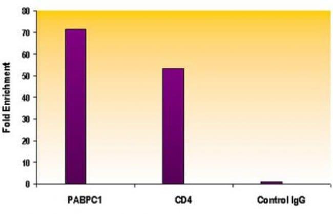 Histone H4K5ac Rabbit anti-Human, Mouse, Unconjugated, Polyclonal, Active